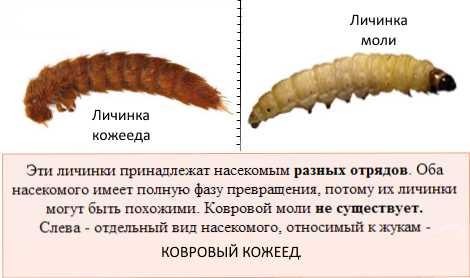 Личинки в компосте. Личинки медведки, бронзовки, майского жука 28