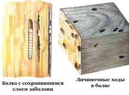Поврежденная жуком древесина фото
