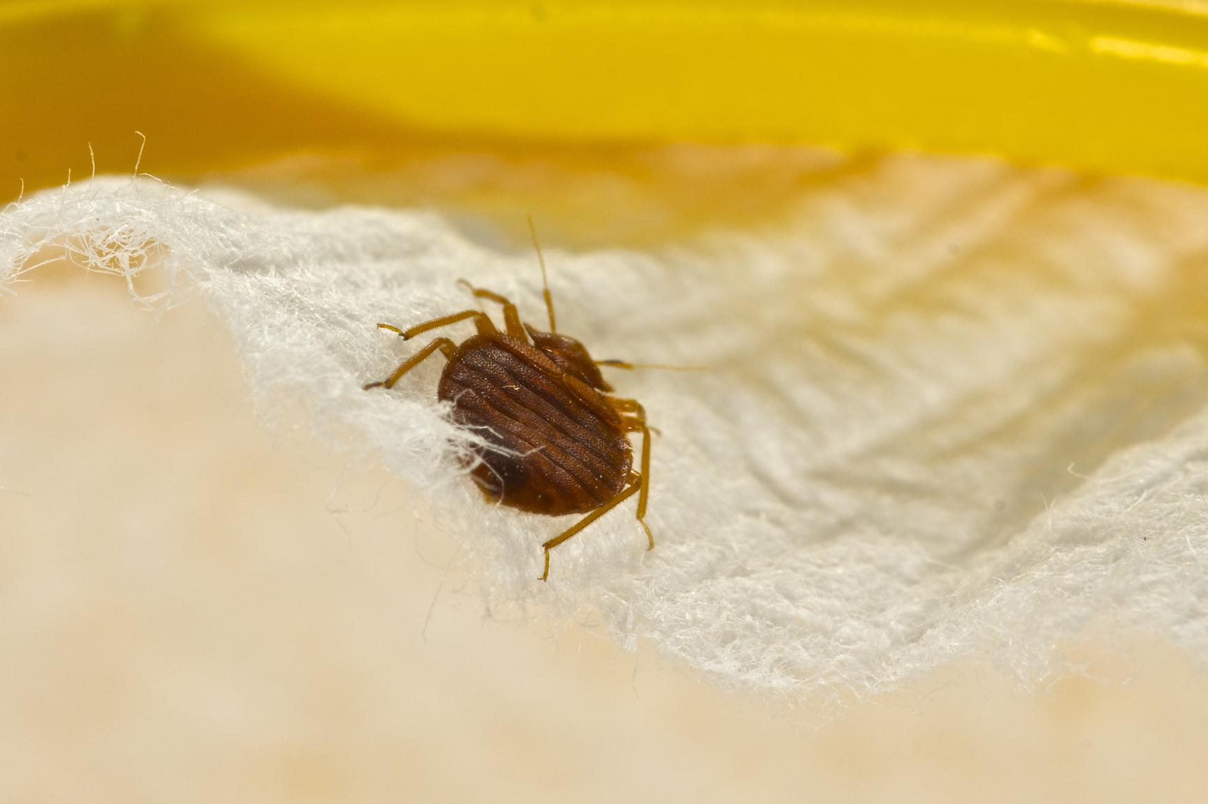 убить паразитов в организме народными средствами отзывы