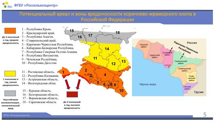 В какие регионы России может попасть мраморный клоп