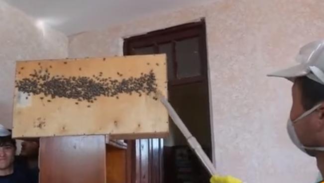 борьба с мраморным клопом в домашних условиях