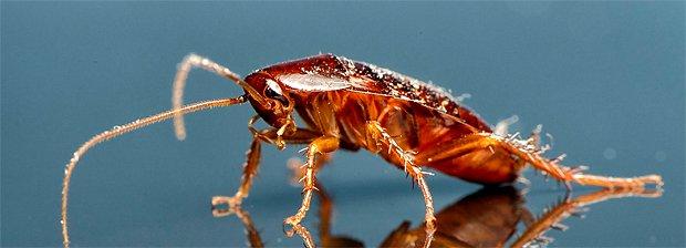 почему тараканы боятся света