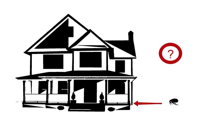 как избавиться дома от блох