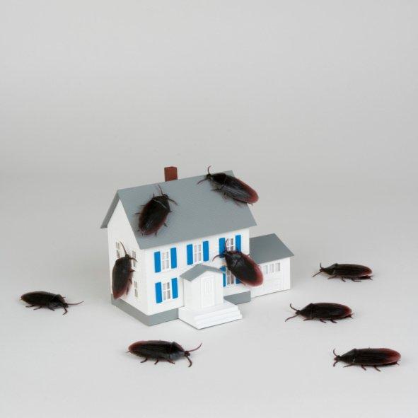Почему завелись тараканы в квартире