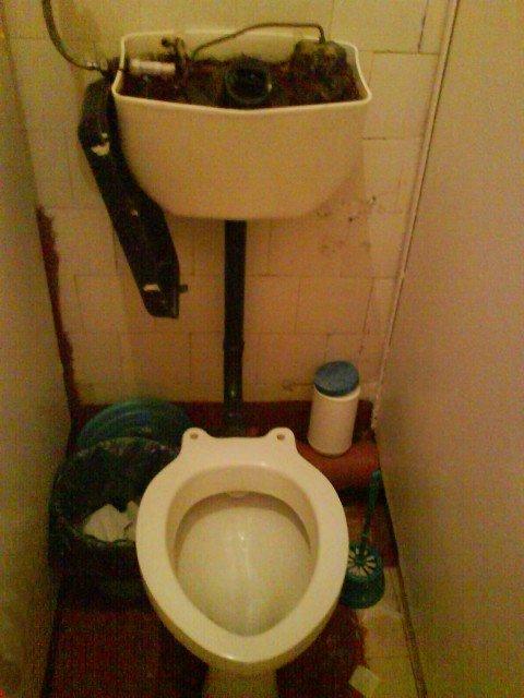 Мокрицы в туалете фото