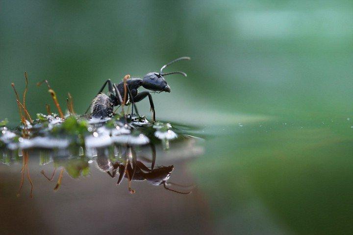 муравей среди воды
