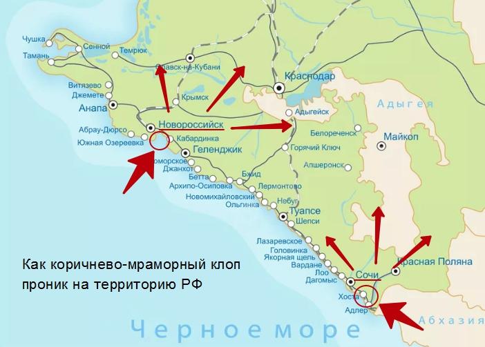 Мраморный клоп из республики Абхазия - как избавиться