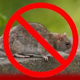 Выведение крыс