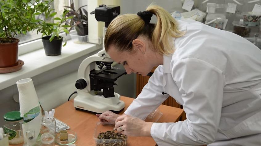 ученые подбирают препараты для борьбы с мраморным клопов в сельском хозяйстве