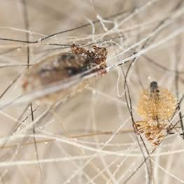 Кто такие власоеды — как выглядят, фото насекомых