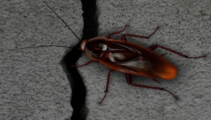 Тараканы проникают в квартиру через трещины в стенах и перекрытиях