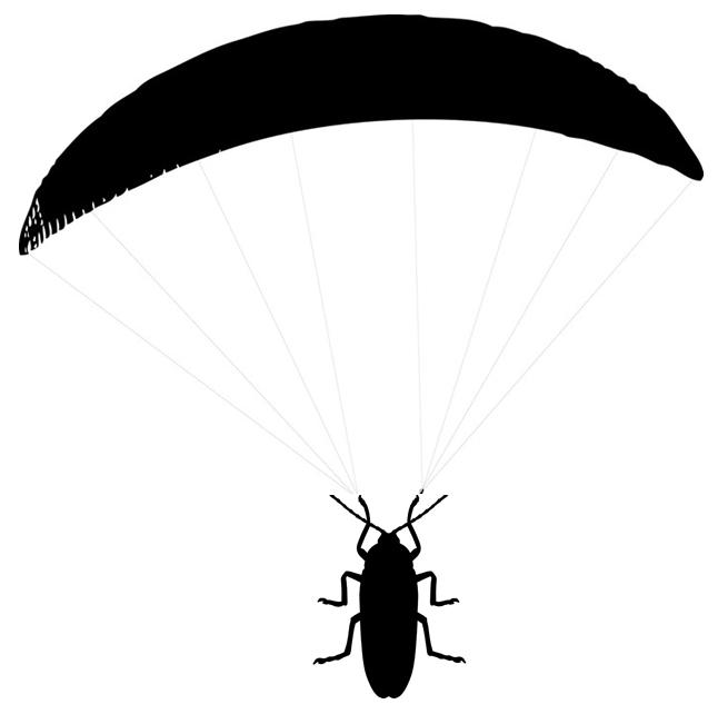 тараканы летают или нет рыжие