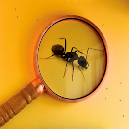 Как найти муравьиную матку