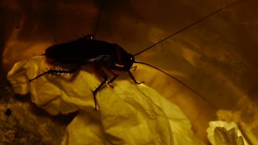 где обитают тараканы в квартире