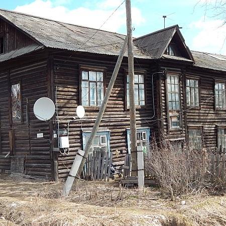 блохи в старых бараках
