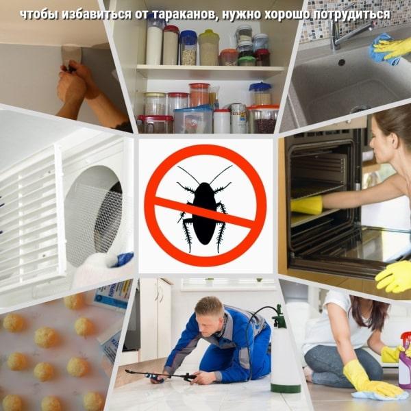 Как самостоятельно избавиться от тараканов в доме навсегда