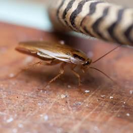 Где живут тараканы