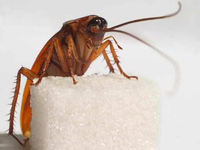 откуда берутся тараканы фото