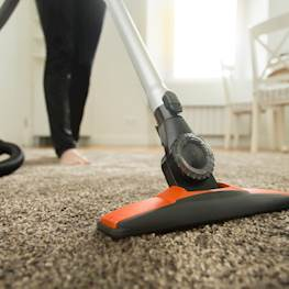 Как быстро избавиться от домашних блох в квартире