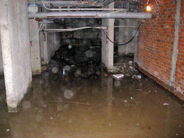 блохи в подвале