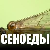 Cеноеды