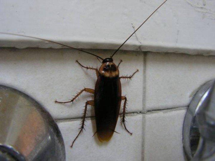 тараканы ползут от соседей