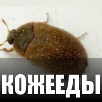 Кожееды
