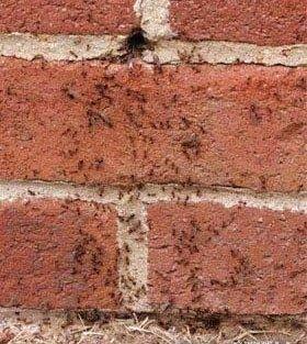 Муравьи в отверстии стены фото