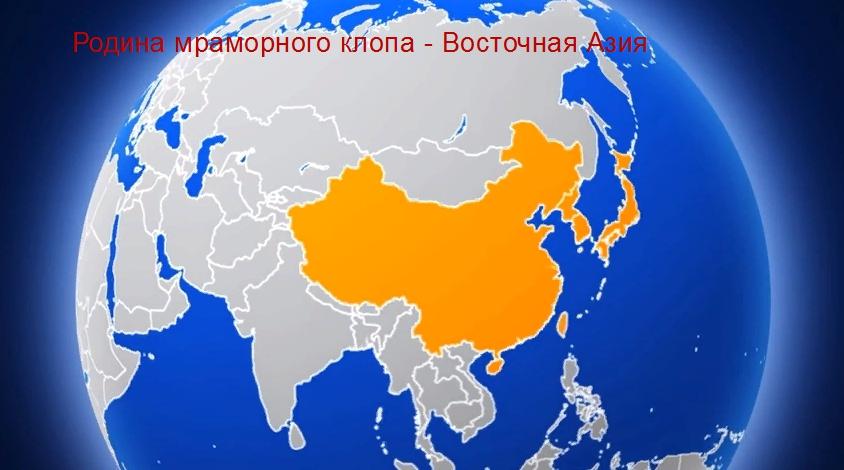 коричнево-мраморный клоп: центр-происхождения Юго - Восточная Азия