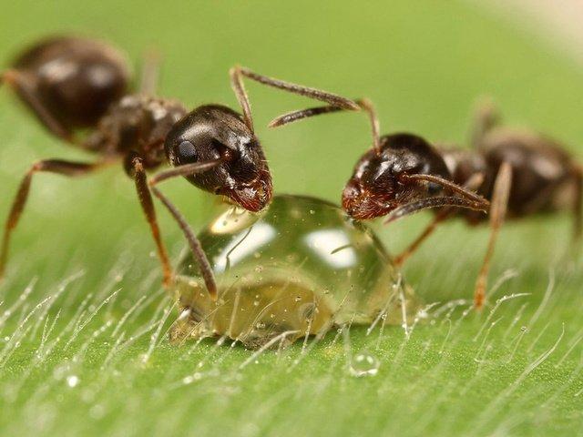 муравьи на дачном участке