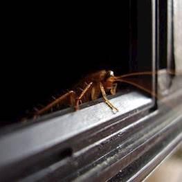 Чем опасны тараканы
