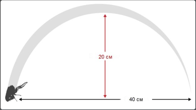 Блоха прыгает на высоту 20 см