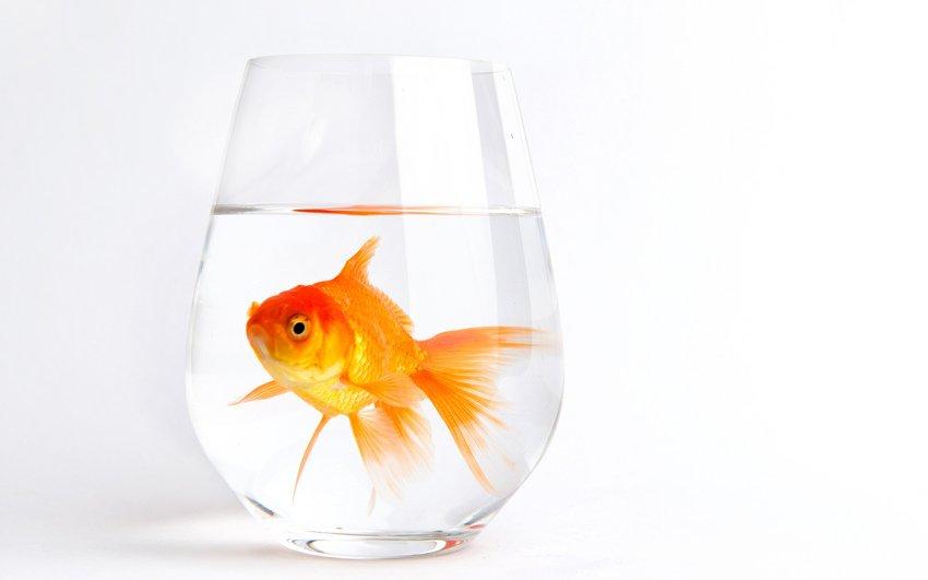 Рыбки очень чувствительны к токсичным веществам