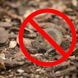 Истребление мышей