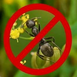 20 советов как бороться с муравьями в доме, на даче и в саду