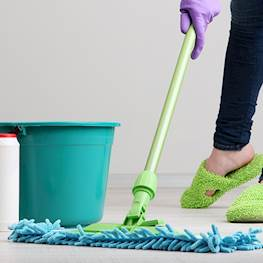 Как избавиться от черных блох в доме или квартире