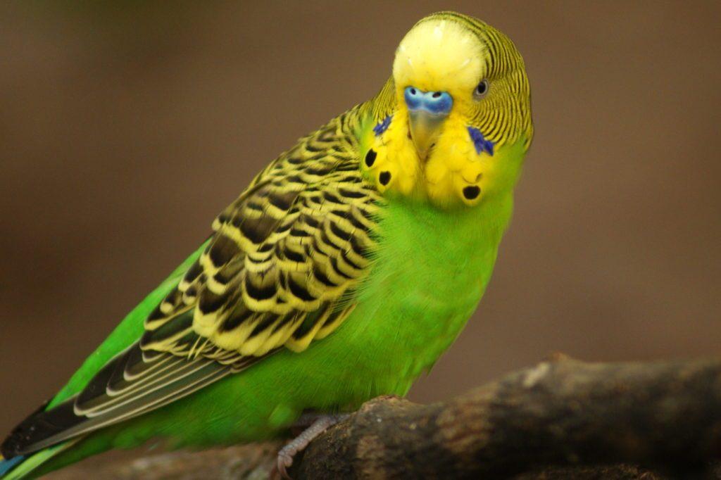 Не допускайте попадания инсектицида в корм для птиц