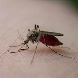 Комары в подвале – что делать и куда обращаться
