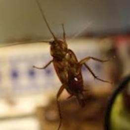Как проходит санитарная обработка от насекомых