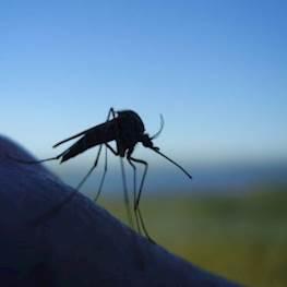 Что любят и чего не любят комары в природе